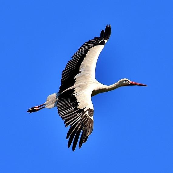 169. Pas sans ailes
