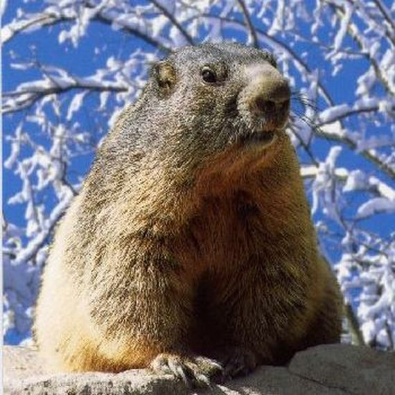 028. Le Réveil des Marmottes