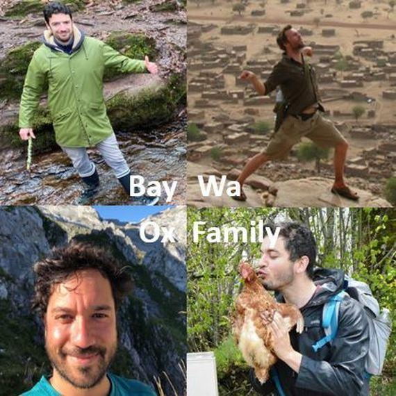380. BayWa (Ox)Family